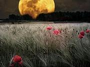Kako  Položaj Meseca Na Nebu Utiče Na Ljubavne Susrete